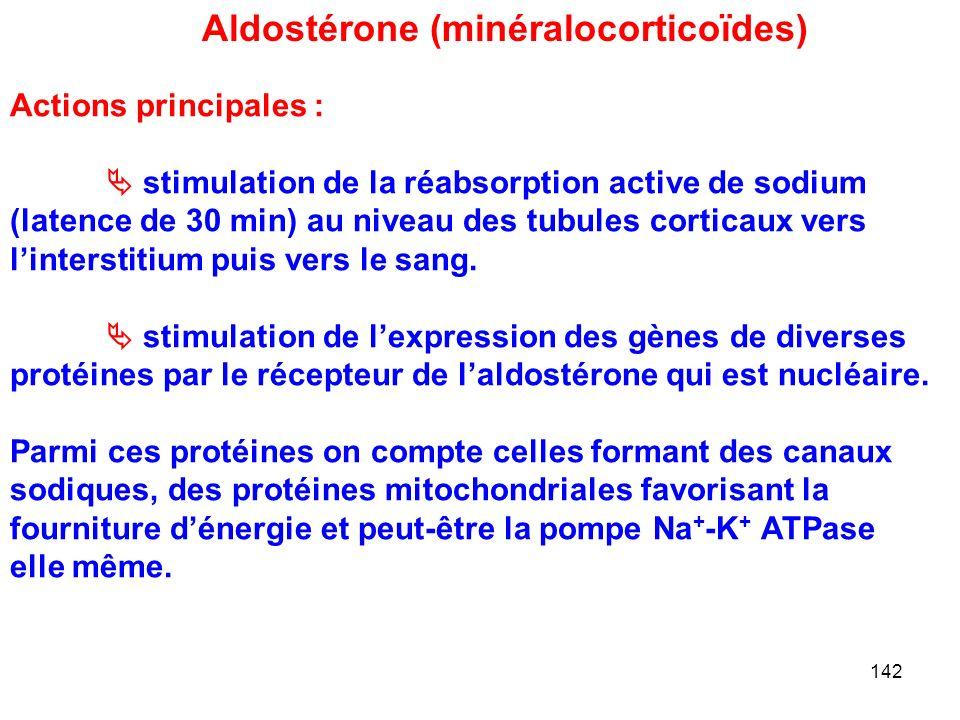 Aldostérone (minéralocorticoïdes)