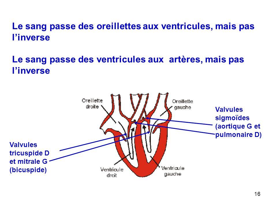 Le sang passe des oreillettes aux ventricules, mais pas l'inverse