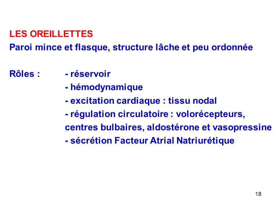 LES OREILLETTES Paroi mince et flasque, structure lâche et peu ordonnée. Rôles : - réservoir. - hémodynamique.