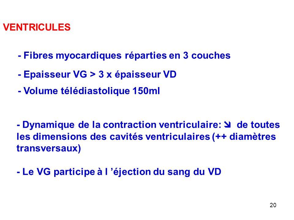 VENTRICULES - Fibres myocardiques réparties en 3 couches. - Epaisseur VG > 3 x épaisseur VD. - Volume télédiastolique 150ml.