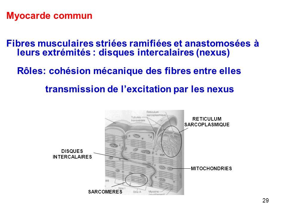 RETICULUM SARCOPLASMIQUE DISQUES INTERCALAIRES