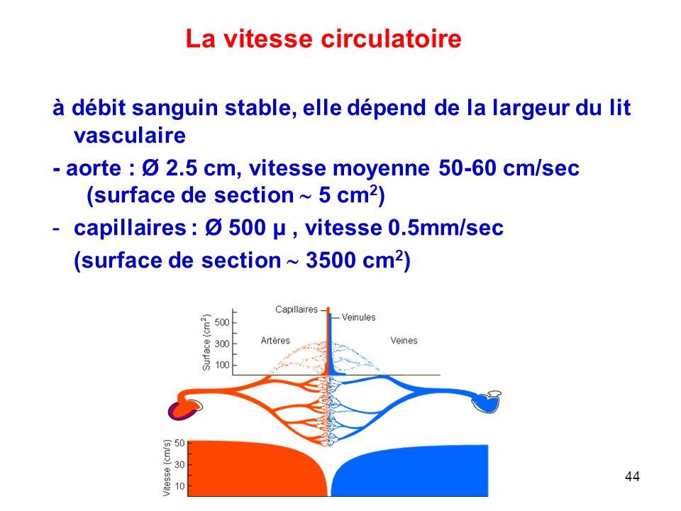 La vitesse circulatoire