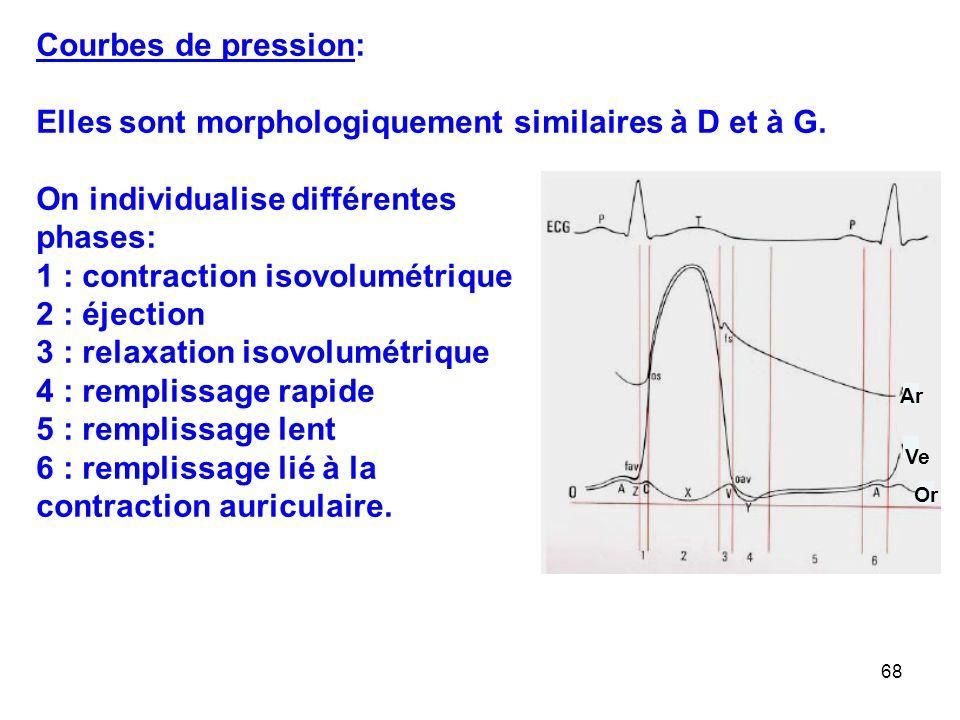 Elles sont morphologiquement similaires à D et à G.