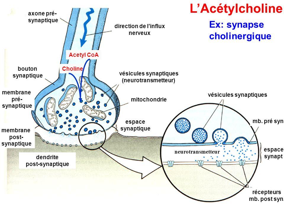 vésicules synaptiques vésicules synaptiques