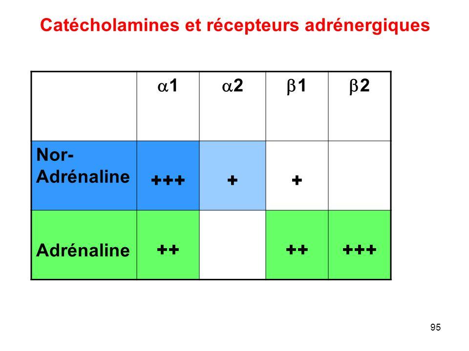 Catécholamines et récepteurs adrénergiques