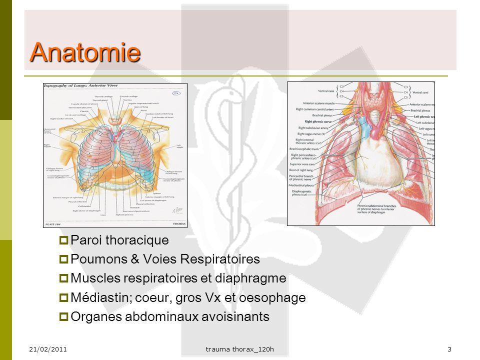 Schön Thorax Anatomie Ppt Ideen - Anatomie Ideen - finotti.info