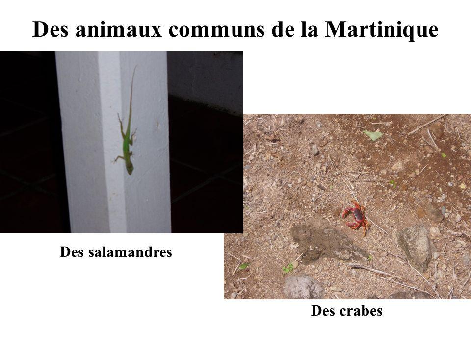 Des animaux communs de la Martinique