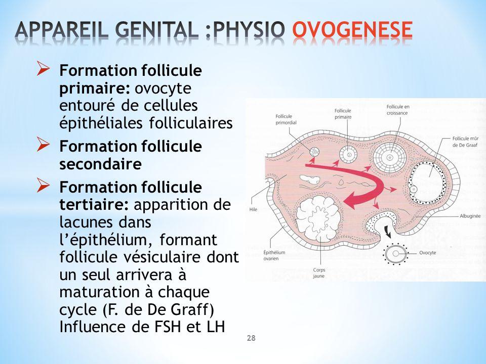 APPAREIL GENITAL :PHYSIO OVOGENESE