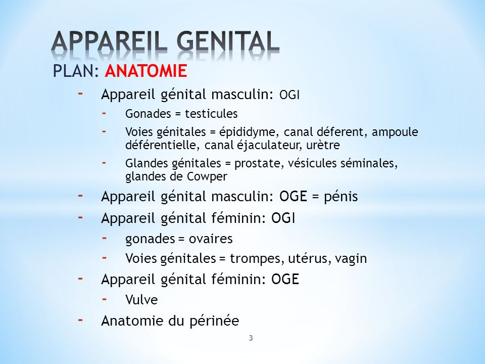 APPAREIL GENITAL PLAN: ANATOMIE Appareil génital masculin: OGI