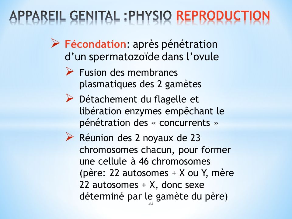 APPAREIL GENITAL :PHYSIO REPRODUCTION
