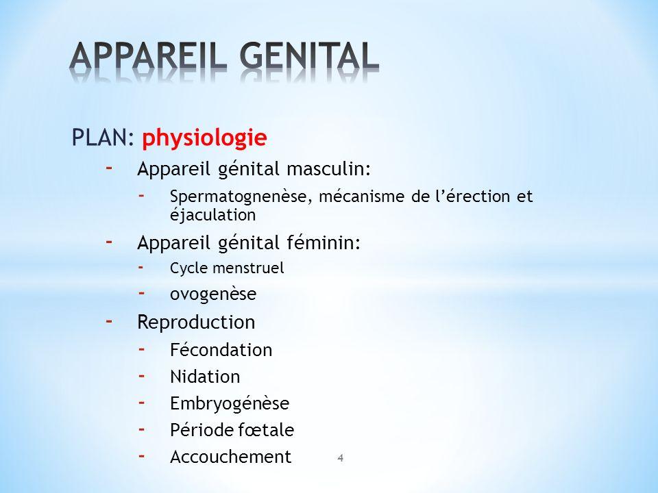 APPAREIL GENITAL PLAN: physiologie Appareil génital masculin: