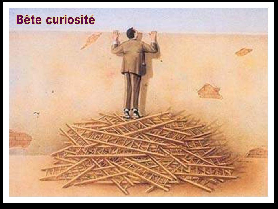 Bête curiosité