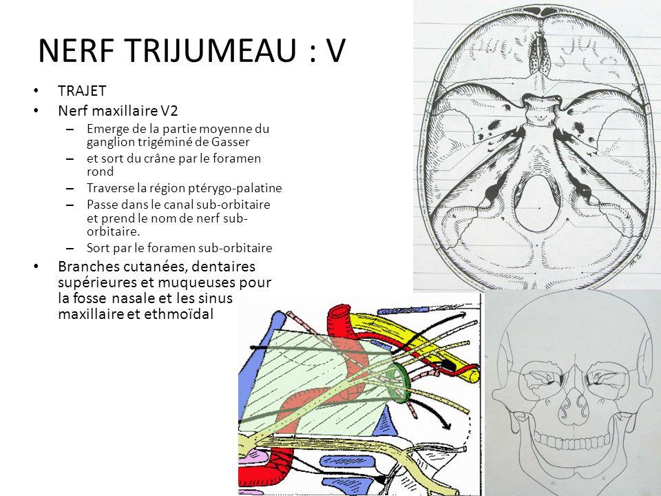 trajet du nerf trijumeau pdf