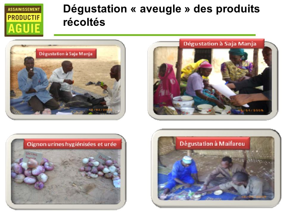 Dégustation « aveugle » des produits récoltés