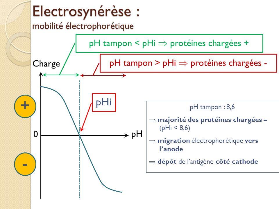 Electrosynérèse : mobilité électrophorétique