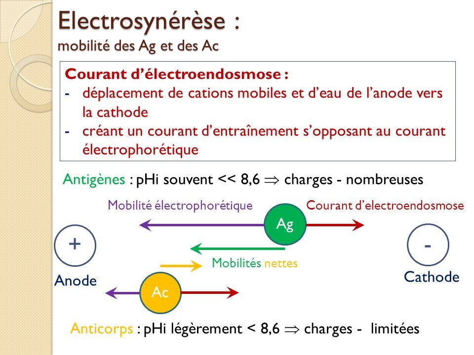 Electrosynérèse : mobilité des Ag et des Ac