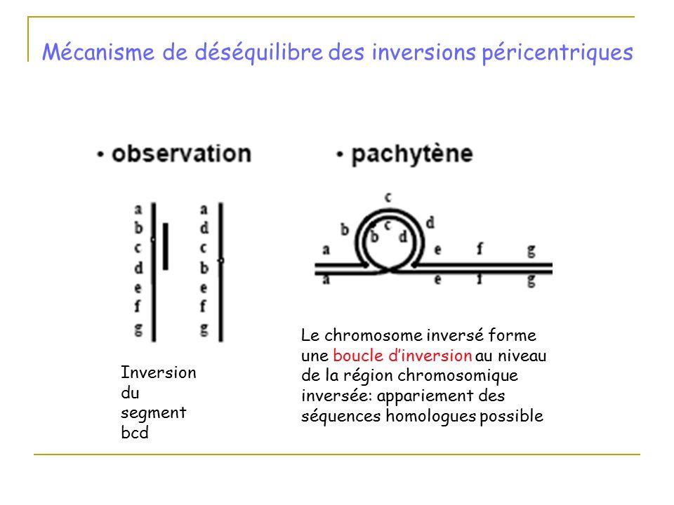 """""""Boucle Imbriqué et Appels de méthodes """" - Java"""