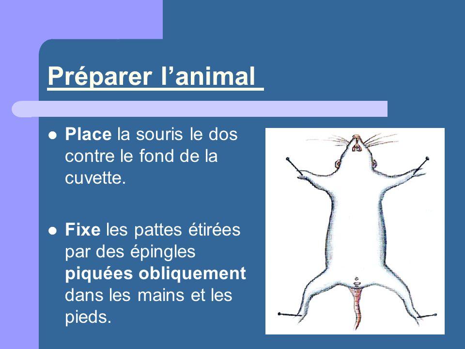 Préparer l'animal Place la souris le dos contre le fond de la cuvette.