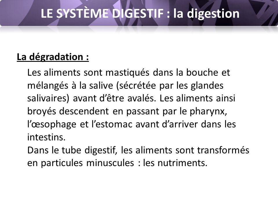 LE SYSTÈME DIGESTIF : la digestion