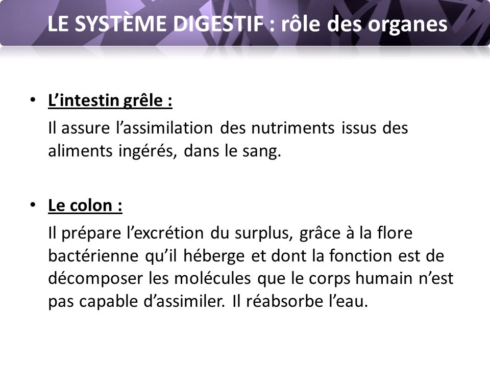 LE SYSTÈME DIGESTIF : rôle des organes