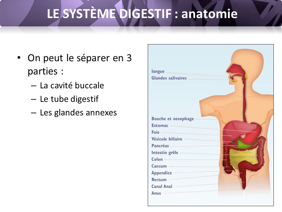 Atemberaubend Anatomie Des Gesichtsnervs Ppt Fotos - Anatomie Ideen ...