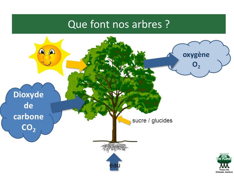 Que font nos arbres Dioxyde de carbone CO2 oxygène O2