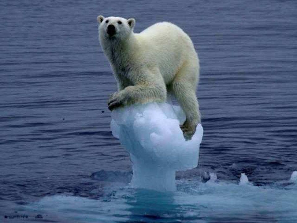 Au début, nous pensions qu'il s'agissait de sauver l'ours polaire