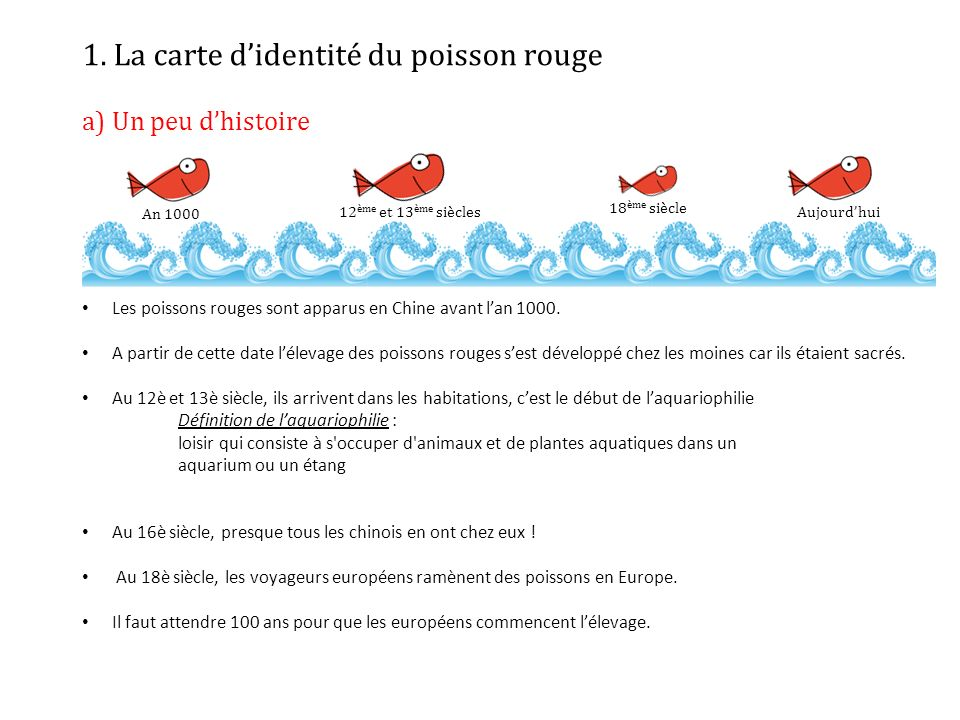 Les poissons rouges ppt t l charger for Elevage poisson rouge
