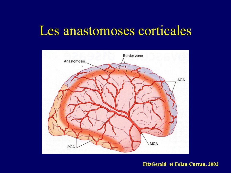 Les anastomoses corticales