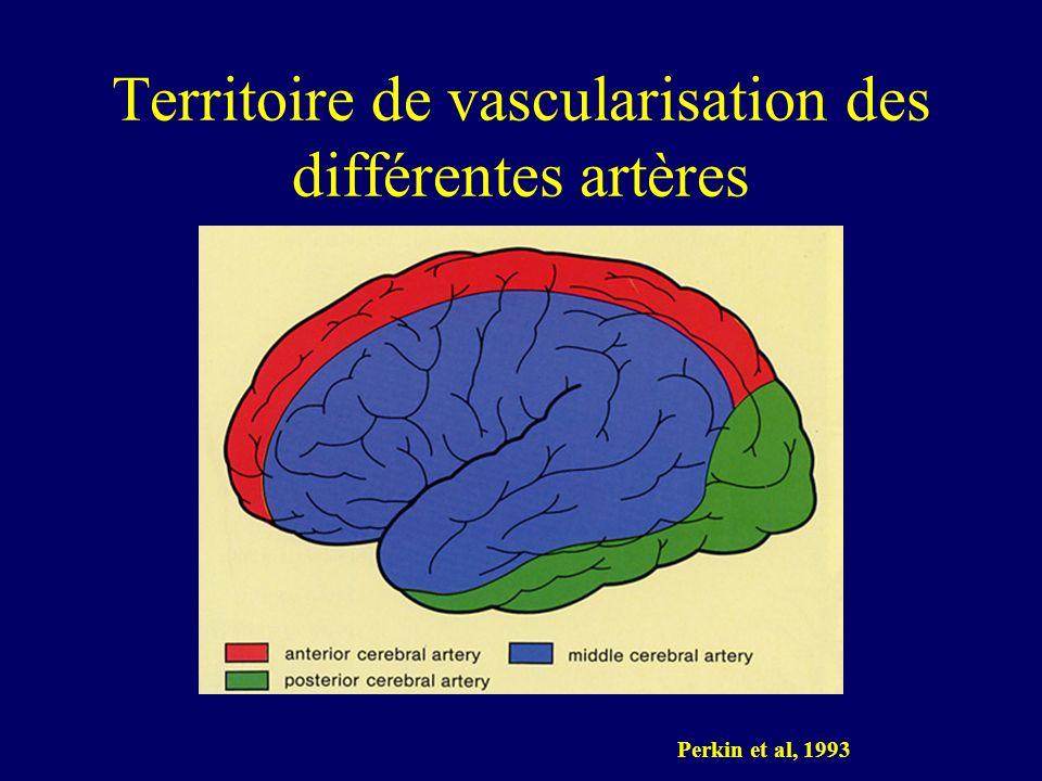 Territoire de vascularisation des différentes artères