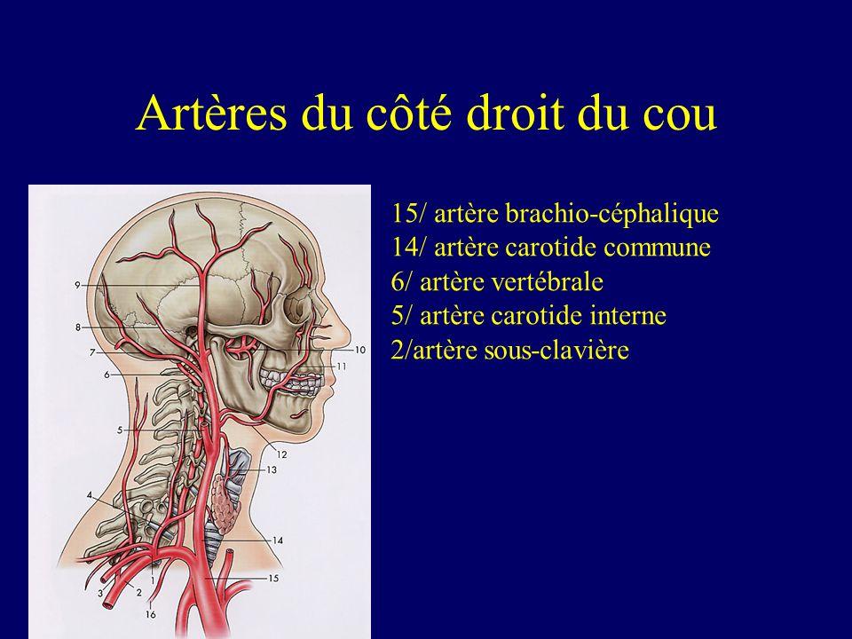 Artères du côté droit du cou