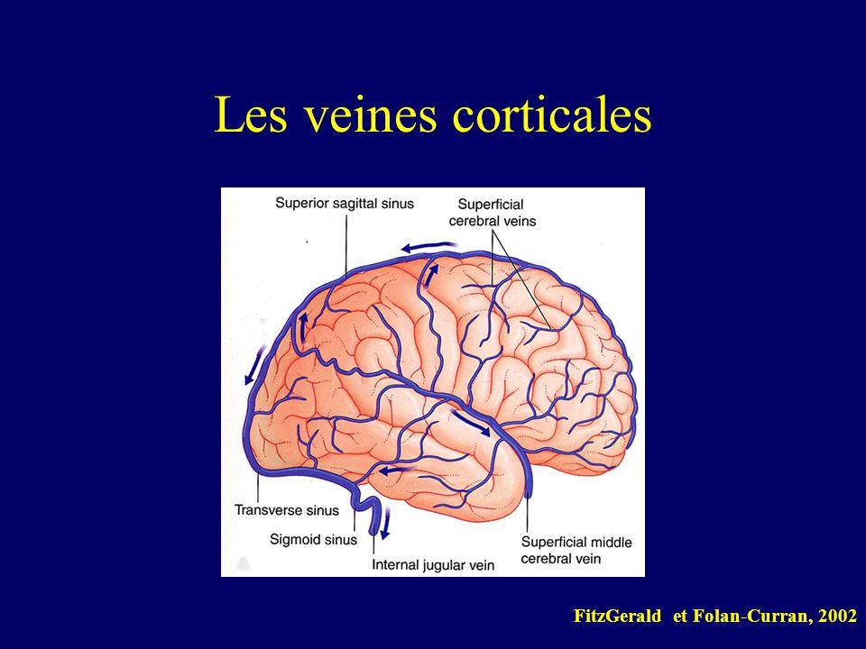 Les veines corticales FitzGerald et Folan-Curran, 2002