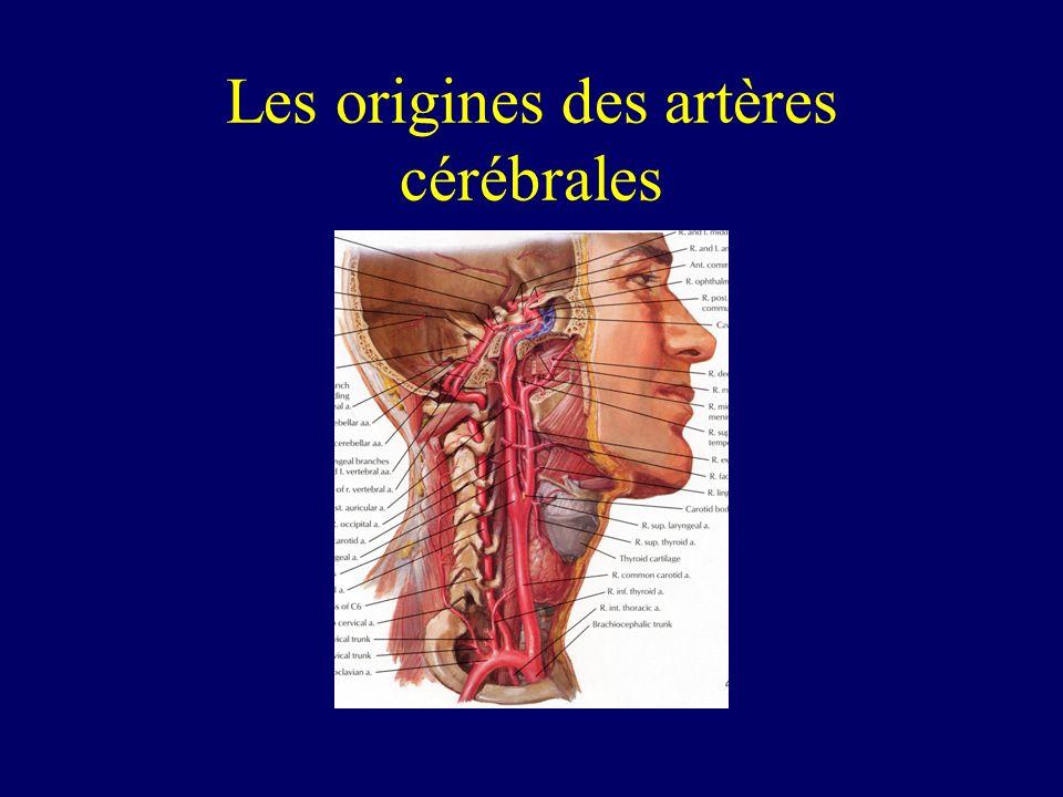 Les origines des artères cérébrales
