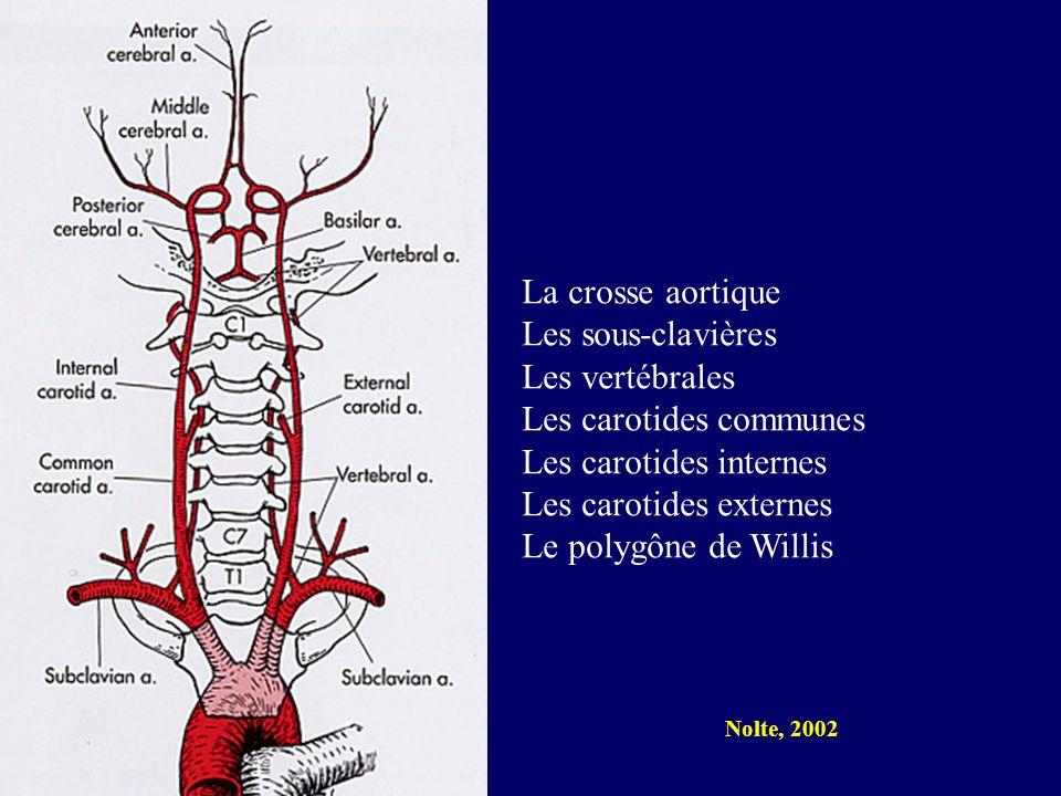 Les carotides communes Les carotides internes Les carotides externes