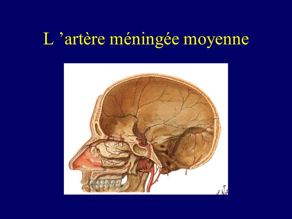 L 'artère méningée moyenne
