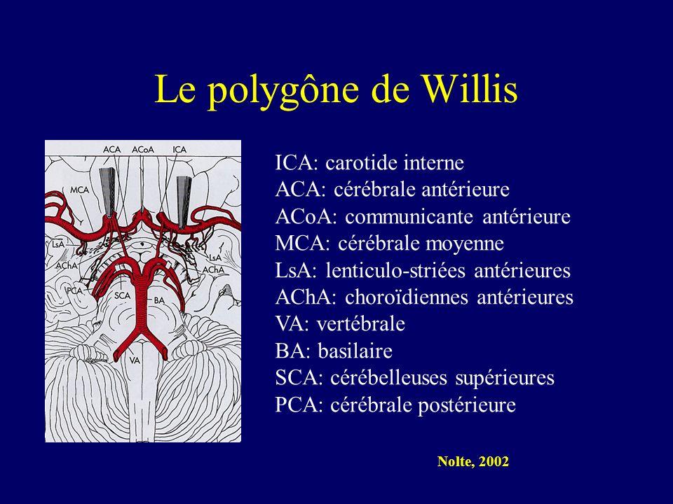 Le polygône de Willis ICA: carotide interne ACA: cérébrale antérieure