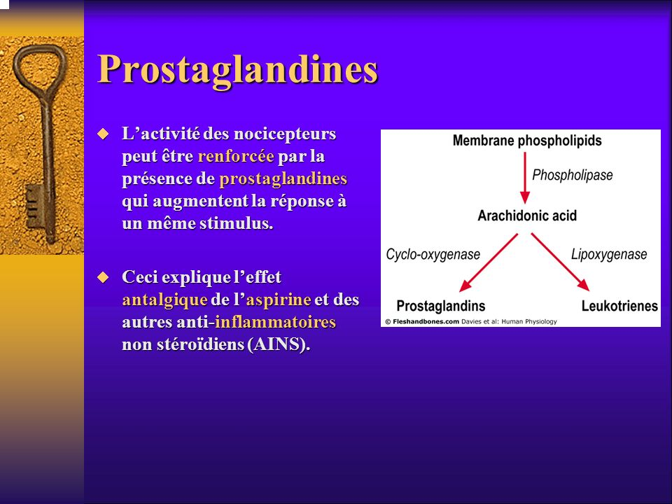 mast cells substance p