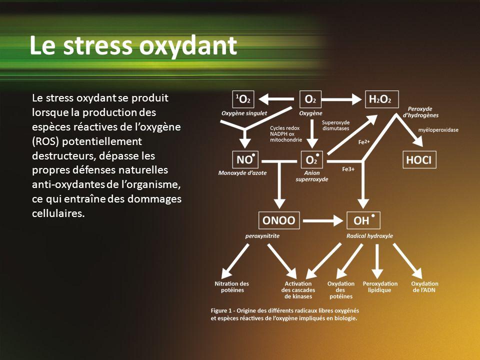 Le stress oxydant