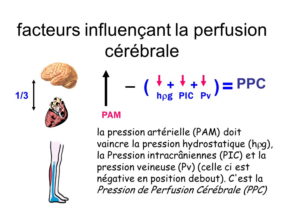 facteurs influençant la perfusion cérébrale