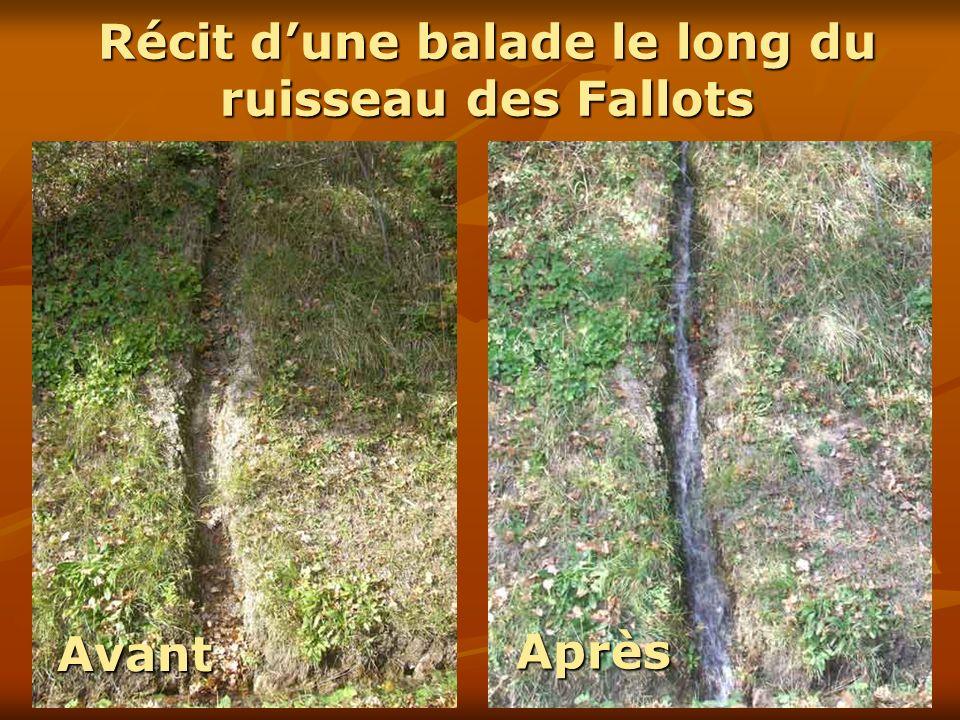 Récit d'une balade le long du ruisseau des Fallots