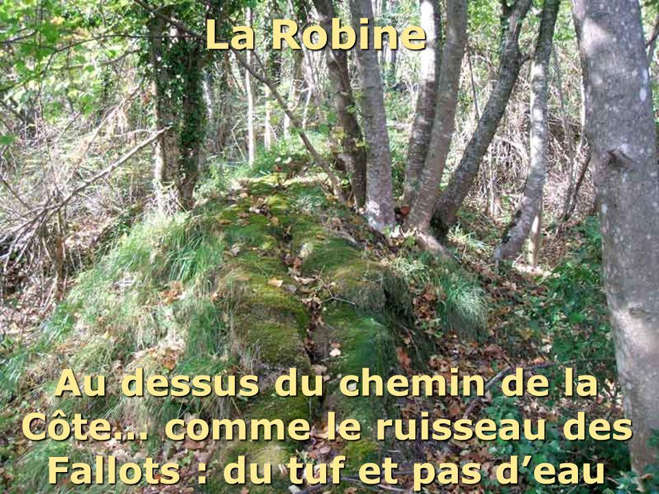 La RobineCe n'est d'ailleurs pas le seul ruisseau de Claix qui coule sur du tuf… il y a en d'autres superbes!