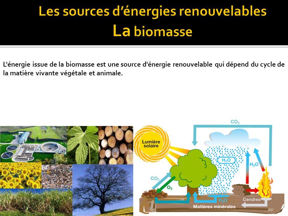 Les sources d'énergies renouvelables La biomasse