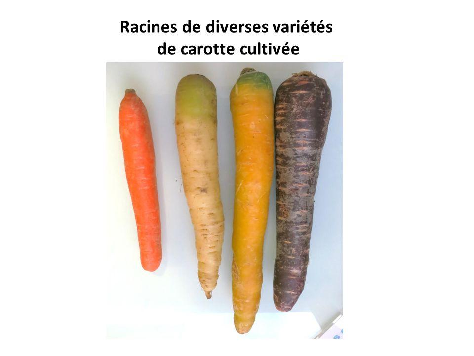 Racines de diverses variétés