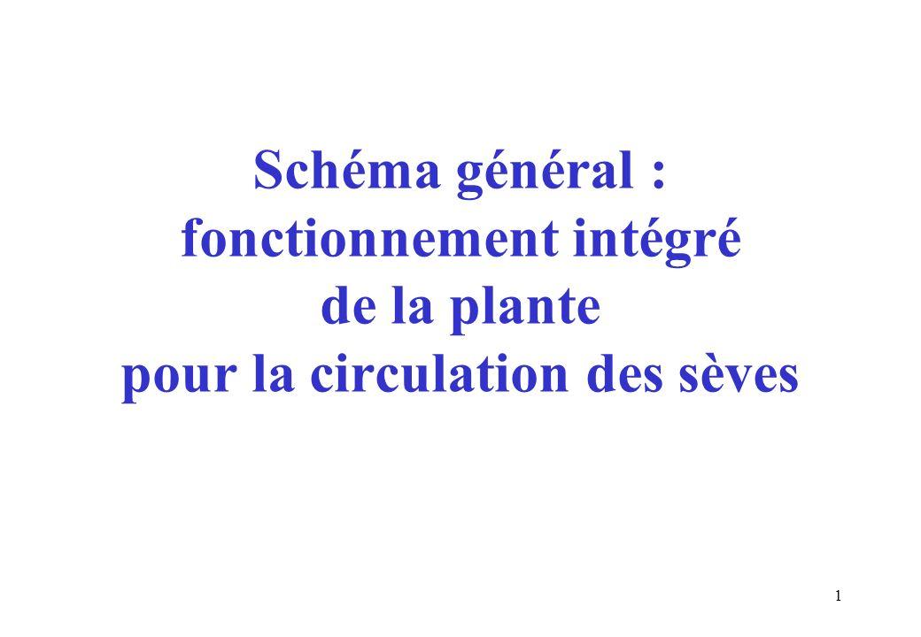 Schéma général : fonctionnement intégré de la plante pour la circulation des sèves