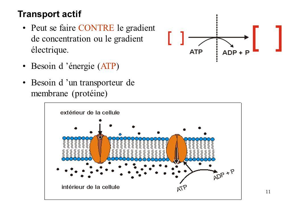 Transport actif Peut se faire CONTRE le gradient de concentration ou le gradient électrique. Besoin d 'énergie (ATP)