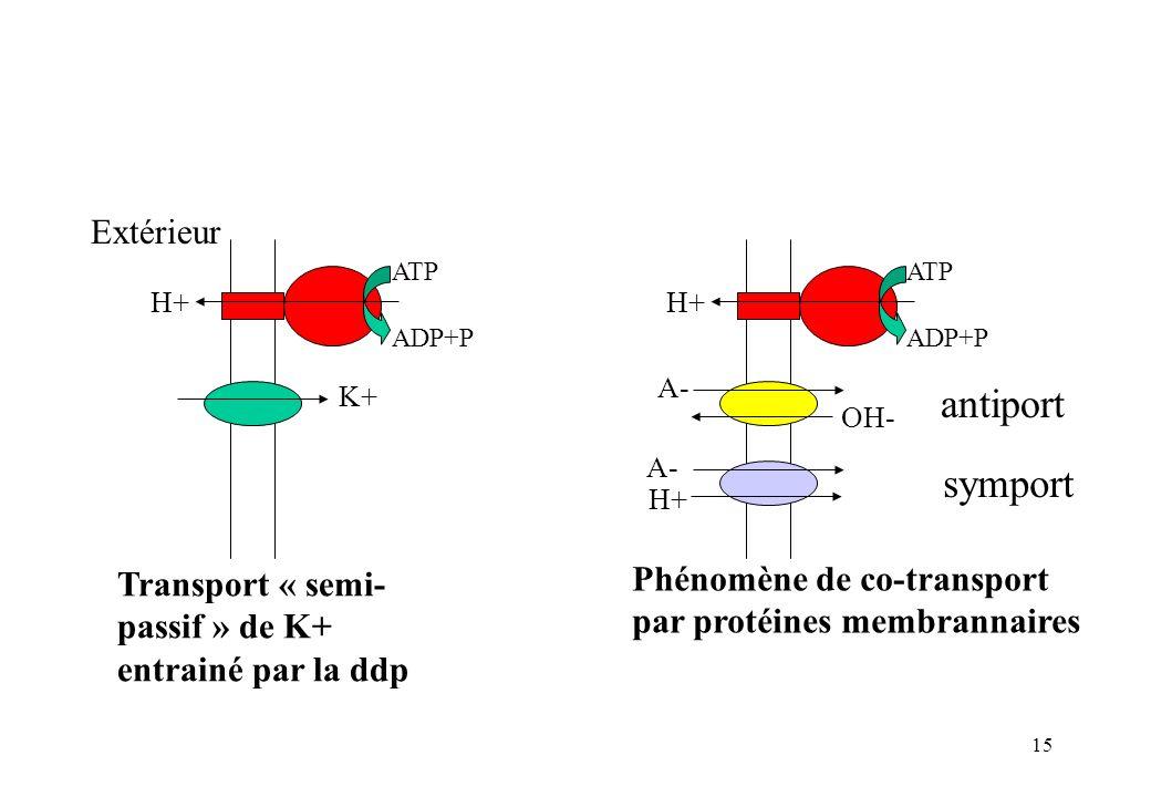 antiport symport Extérieur Phénomène de co-transport