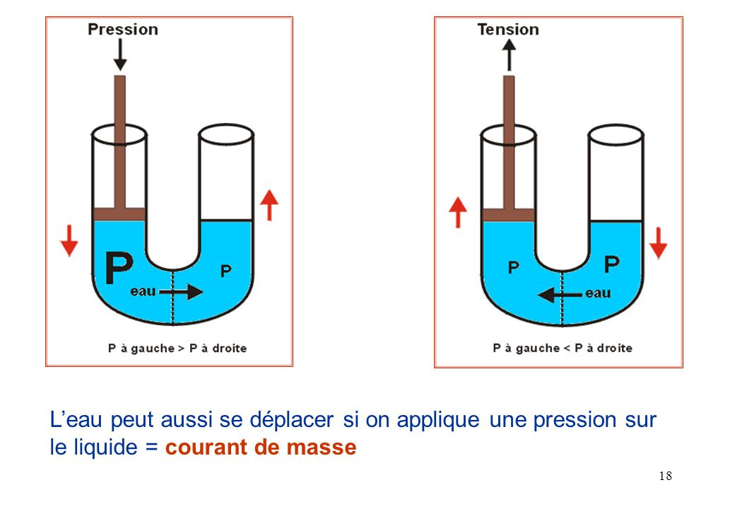 L'eau peut aussi se déplacer si on applique une pression sur le liquide = courant de masse