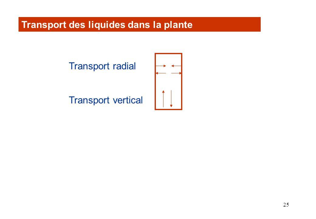 Transport des liquides dans la plante
