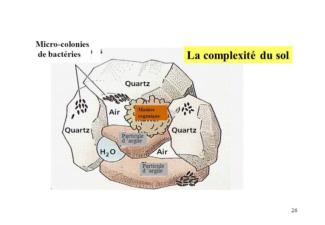 La complexité du sol Micro-colonies de bactéries Particule d 'argile