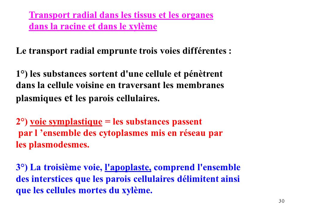 Transport radial dans les tissus et les organes